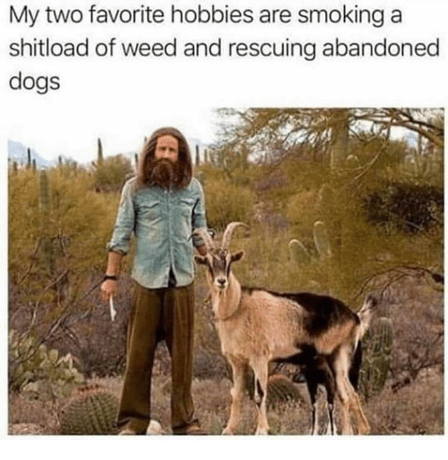Dogs, Memes, and Smoking: My two favorite hobbies are smoking a  shitload of weed and rescuing abandoned  dogs