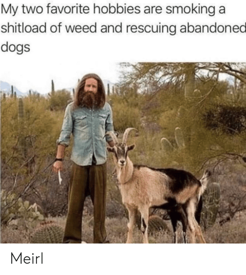 Dogs, Smoking, and Weed: My two favorite hobbies are smoking a  shitload of weed and rescuing abandoned  dogs Meirl