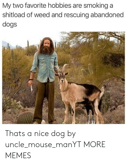 Dank, Dogs, and Memes: My two favorite hobbies are smoking a  shitload of weed and rescuing abandoned  dogs Thats a nice dog by uncle_mouse_manYT MORE MEMES