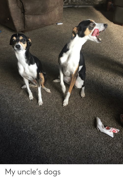 Dogs, Uncle, and My Uncle: My uncle's dogs