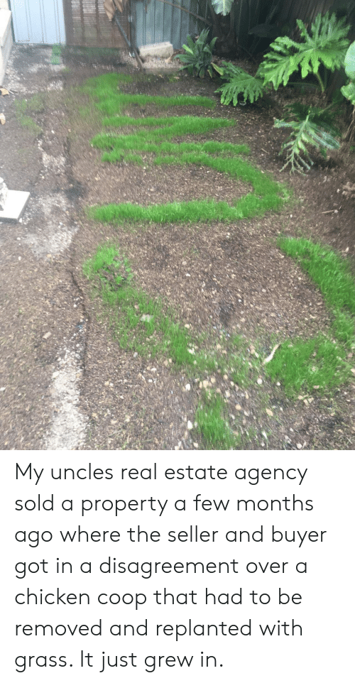 Buyer: My uncles real estate agency sold a property a few months ago where the seller and buyer got in a disagreement over a chicken coop that had to be removed and replanted with grass. It just grew in.