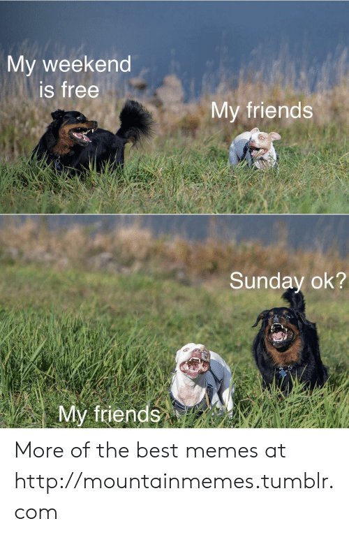 Friends, Memes, and Tumblr: My weekend  is free  My friends  Sunday ok?  My friends More of the best memes at http://mountainmemes.tumblr.com