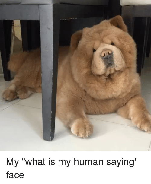 """Memes, What Is, and 🤖: My """"what is my human saying"""" face"""