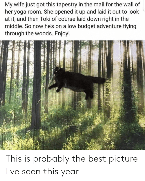 Memes, Best, and Budget: My wife just got this tapestry in the mail for the wall of  her yoga room. She opened it up and laid it out to look  at it, and then Toki of course laid down right in the  middle. So now he's on a low budget adventure flying  through the woods. Enjoy! This is probably the best picture I've seen this year