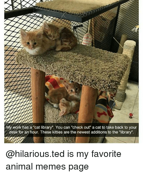 """Kitties, Memes, and Ted: My work has a """"cat library"""". You can """"check out"""" a cat to take back to your  desk for an hour. These kitties are the newest additions to the """"library"""" @hilarious.ted is my favorite animal memes page"""
