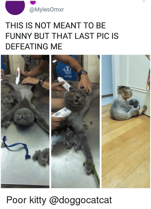 Funny, Memes, and 🤖: @MylesOmxr  THIS IS NOT MEANT TO BE  FUNNY BUT THAT LAST PIC IS  DEFEATING ME  addo Poor kitty @doggocatcat