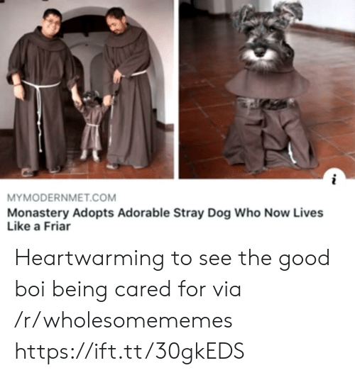 Good Boi: MYMODERNMET.COM  Monastery Adopts Adorable Stray Dog Who Now Lives  Like a Friar Heartwarming to see the good boi being cared for via /r/wholesomememes https://ift.tt/30gkEDS