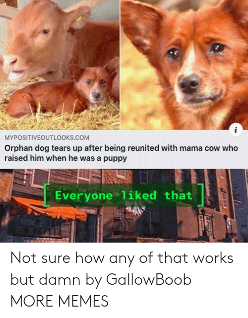 orphan: MYPOSITIVEOUTL0OKS.COM  Orphan dog tears up after being reunited with mama cow who  raised him when he was a puppy  Everyone 1iked that Not sure how any of that works but damn by GallowBoob MORE MEMES