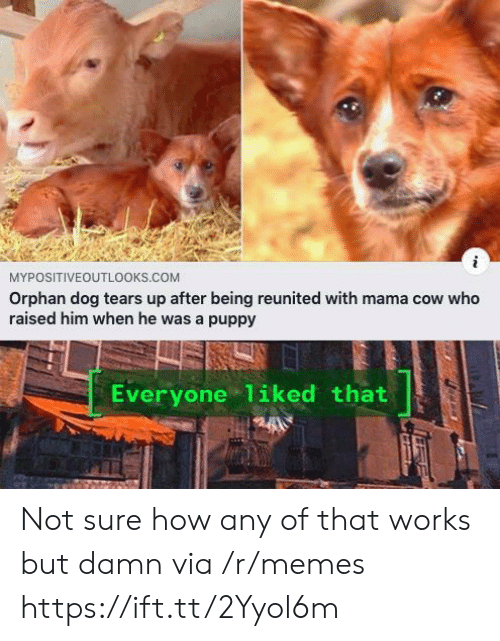 orphan: MYPOSITIVEOUTL0OKS.COM  Orphan dog tears up after being reunited with mama cow who  raised him when he was a puppy  Everyone 1iked that Not sure how any of that works but damn via /r/memes https://ift.tt/2Yyol6m