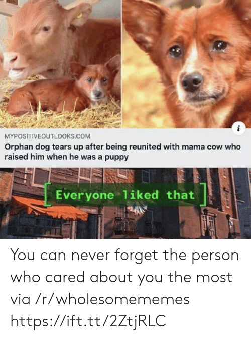 orphan: MYPOSITIVEOUTLOOKS.COM  Orphan dog tears up after being reunited with mama cow who  raised him when he was a puppy  Everyone 1iked that You can never forget the person who cared about you the most via /r/wholesomememes https://ift.tt/2ZtjRLC
