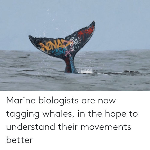 Hope, Whales, and Marine: NA  77 Marine biologists are now tagging whales, in the hope to understand their movements better