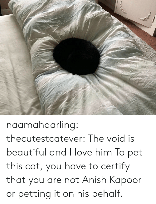 Behalf: naamahdarling:  thecutestcatever: The void is beautiful and I love him  To pet this cat, you have to certify that you are not Anish Kapoor or petting it on his behalf.