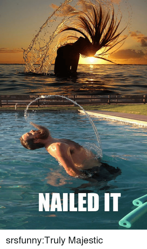 Tumblr, Blog, and Http: NAILED IT srsfunny:Truly Majestic