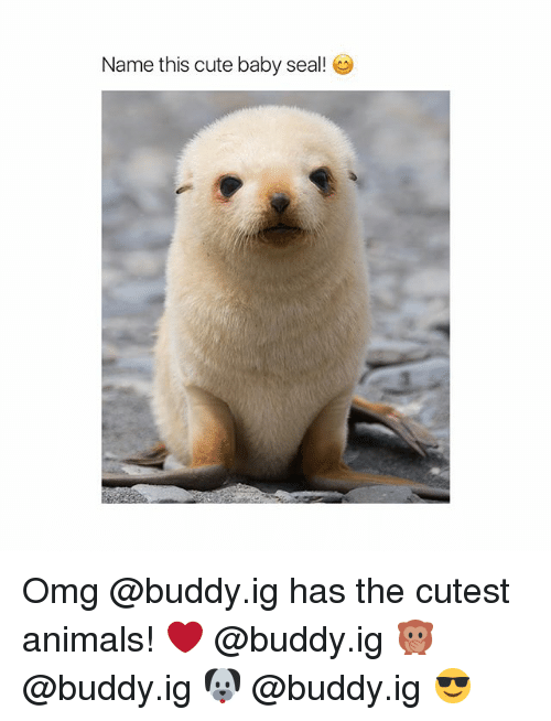 cute baby: Name this cute baby seal! Omg @buddy.ig has the cutest animals! ❤️ @buddy.ig 🙊 @buddy.ig 🐶 @buddy.ig 😎