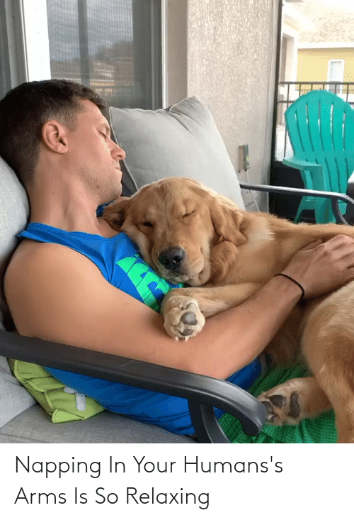 Aww Memes: Napping In Your Humans's Arms Is So Relaxing