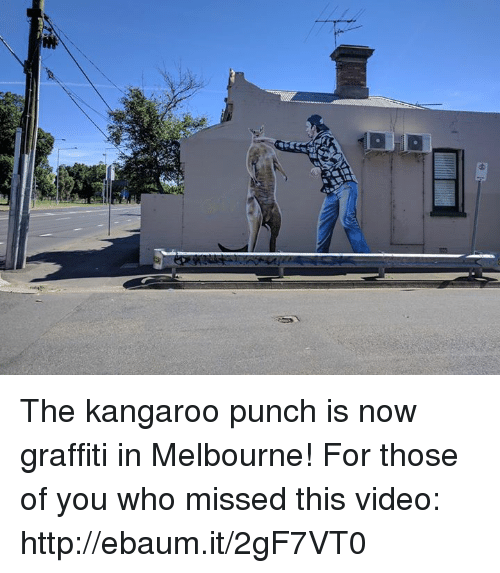ebaums: Nat The kangaroo punch is now graffiti in Melbourne!   For those of you who missed this video: http://ebaum.it/2gF7VT0
