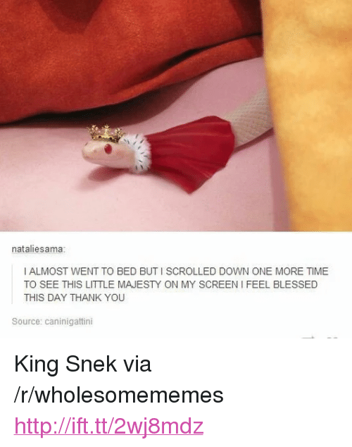 "Blessed, Thank You, and Http: nataliesama:  I ALMOST WENT TO BED BUT I SCROLLED DOWN ONE MORE TIME  TO SEE THIS LITTLE MAJESTY ON MY SCREEN I FEEL BLESSED  THIS DAY THANK YOU  Source: caninigattini <p>King Snek via /r/wholesomememes <a href=""http://ift.tt/2wj8mdz"">http://ift.tt/2wj8mdz</a></p>"