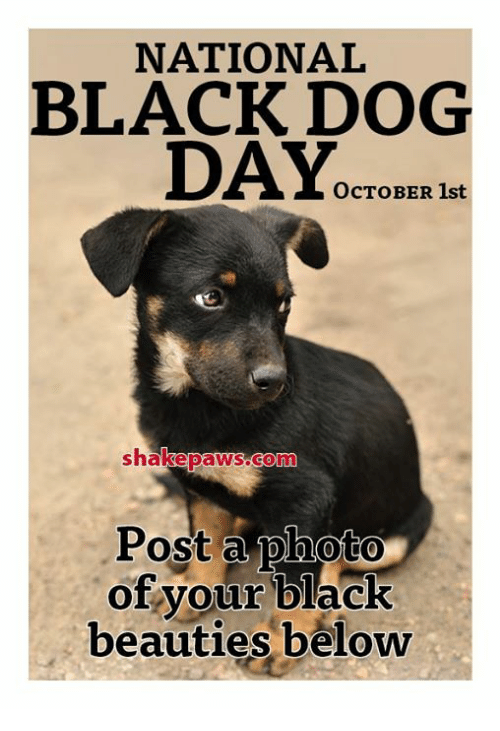 Dog Day: NATIONAL  BLACK DOG  DAY.  OCTOBER 1st  B1  shakepaWS.Conn  Post a photo  of your black  beauties beloww