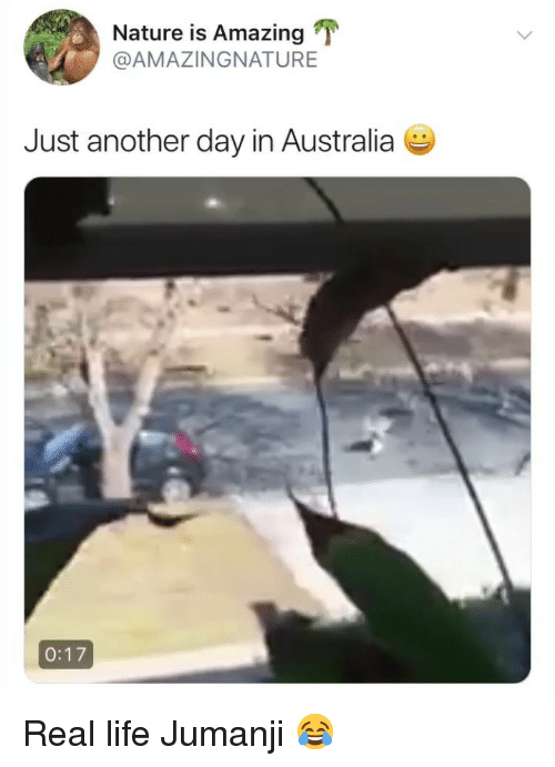 Life, Australia, and Nature: Nature is Amazing  @AMAZINGNATURE  Just another day in Australia  0:17 Real life Jumanji 😂