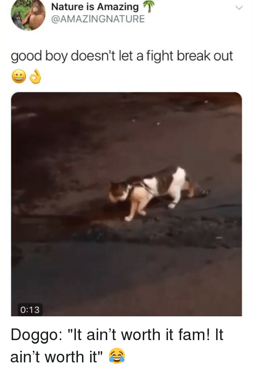 """Fam, Break, and Good: Nature is Amazing T  @AMAZINGNATURE  good boy doesn't let a fight break out  0:13 Doggo: """"It ain't worth it fam! It ain't worth it"""" 😂"""