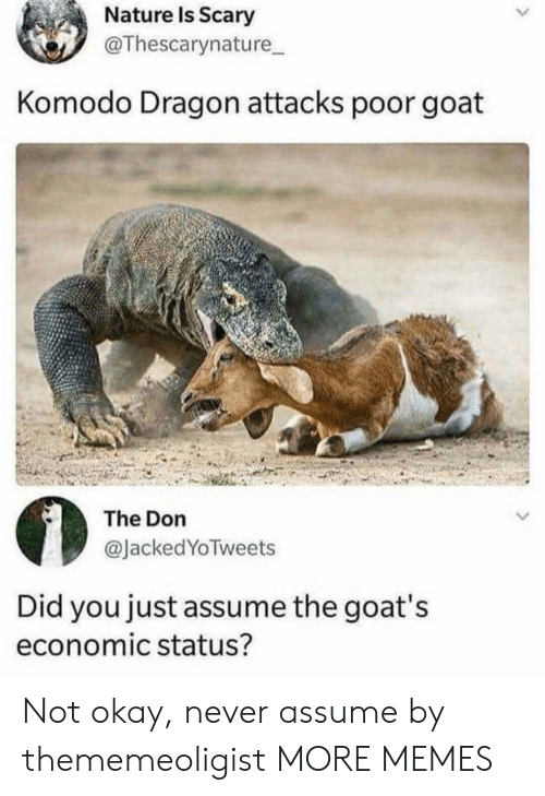 Dank, Memes, and Target: Nature Is Scary  @Thescarynature  Komodo Dragon attacks poor goat  The Don  @JackedYoTweets  Did you just assume the goat's  economic status? Not okay, never assume by thememeoligist MORE MEMES