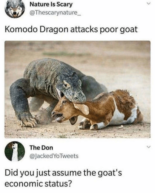 Goat, Nature, and The Don: Nature Is Scary  @Thescarynature  Komodo Dragon attacks poor goat  The Don  @JackedYoTweets  Did you just assume the goat's  economic status?