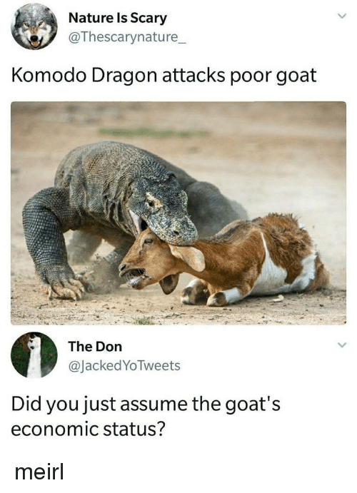 Goat, Nature, and The Don: Nature ls Scary  @Thescarynature_  Komodo Dragon attacks poor goat  The Don  @JackedYoTweets  Did you just assume the goat's  economic status? meirl