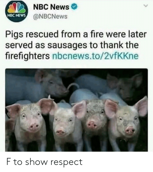 Nbcnews: NBC News  @NBCNews  NBC NEWS  Pigs rescued from a fire were later  served as sausages to thank the  firefighters nbcnews.to/2vfKKne F to show respect