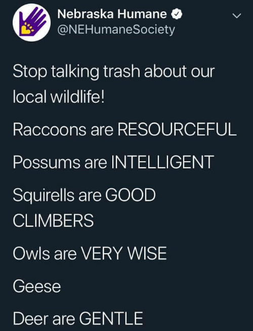 Possums: Nebraska Humane  @NEHumaneSociety  Stop talking trash about our  local wildlife!  Raccoons are RESOURCEFUL  Possums are INTELLIGENT  Squirells are GOOD  CLIMBERS  Owls are VERY WISE  Geese  Deer are GENTLE