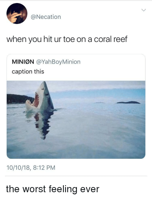 reef: @Necation  when you hit ur toe on a coral reef  MINIØN @YahBoyMinion  caption this  10/10/18, 8:12 PM the worst feeling ever