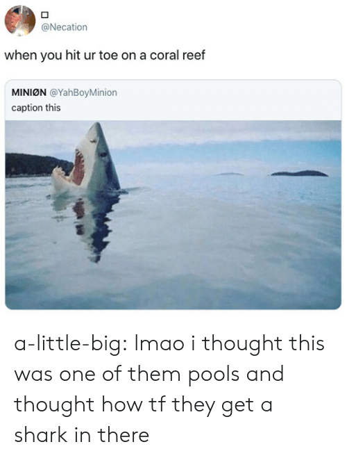 Lmao, Tumblr, and Shark: @Necation  when you hit ur toe on a coral reef  MINION @YahBoyMinion  caption this a-little-big:  lmao i thought this was one of them pools and thought how tf they get a shark in there
