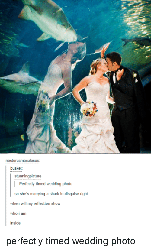 Shark, Wedding, and Who: necturusmaculosus:  busket  stunningpicture  | Perfectly timed wedding photo  so she's marrying a shark in disguise right  when will my reflection show  who i am  inside perfectly timed wedding photo
