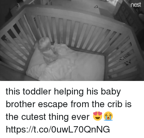 nesting: nest this toddler helping his baby brother escape from the crib is the cutest thing ever 😍😭  https://t.co/0uwL70QnNG