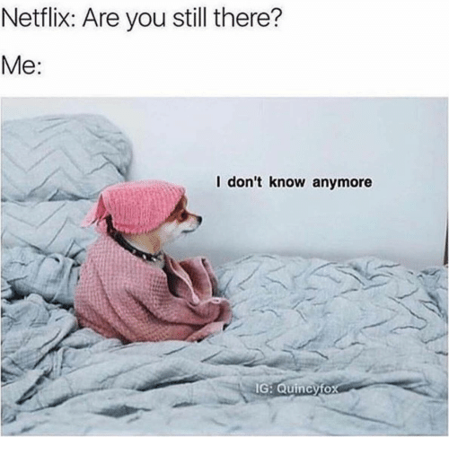 Netflix, You, and Still: Netflix: Are you still there?  Мe:  I don't know anymore  IG: Quincyfox
