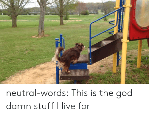 Stuff I: neutral-words:  This is the god damn stuff I live for