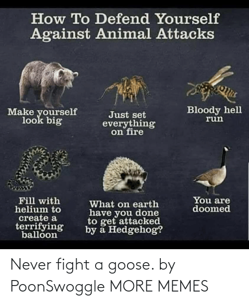 Fight: Never fight a goose. by PoonSwoggle MORE MEMES