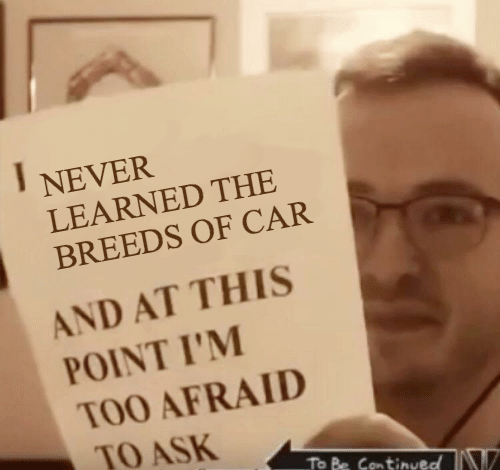 Too Afraid To Ask: NEVER  LEARNED THE  BREEDS OF CAR  AND AT THIS  POINT I'M  TOO AFRAID  TO ASK  To Be Continueo