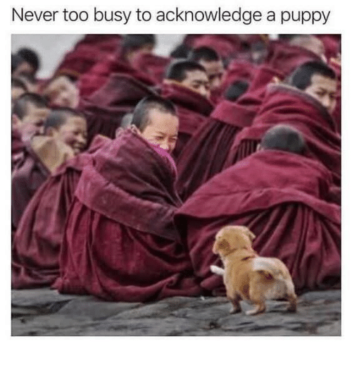 Puppy, Never, and Acknowledge: Never too busy to acknowledge a puppy