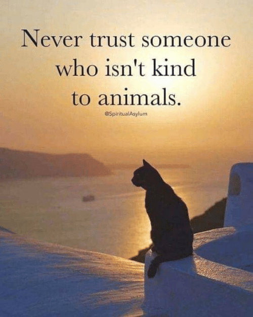 Animals, Memes, and Never: Never trust someone  who isn't kind  to animals.  @SpiritualAsylum