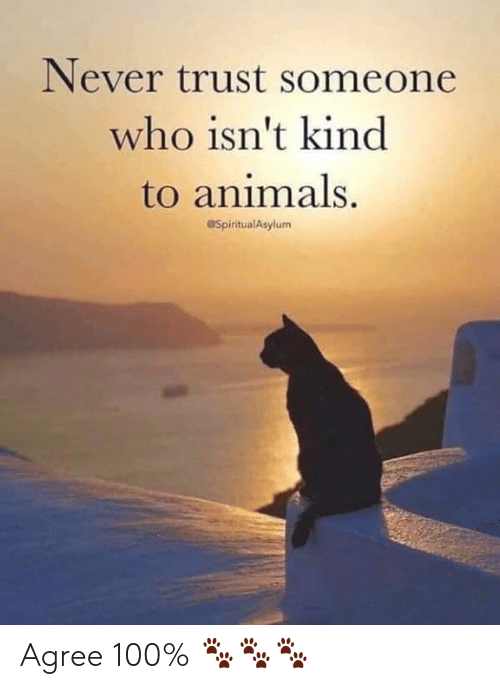 Animals, Memes, and Never: Never trust someone  who isn't kind  to animals.  @SpiritualAsylum Agree 100% 🐾🐾🐾