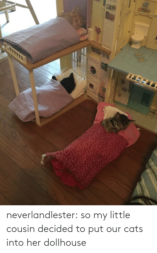 cousin: neverlandlester:  so my little cousin decided to put our cats into her dollhouse