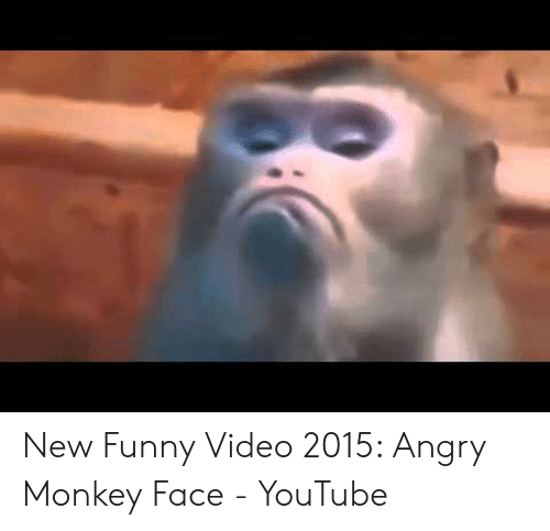 New Funny Video 2015 Angry Monkey Face - YouTube | Funny Meme on