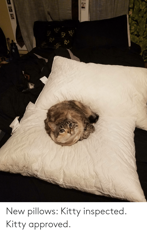 pillows: New pillows: Kitty inspected. Kitty approved.