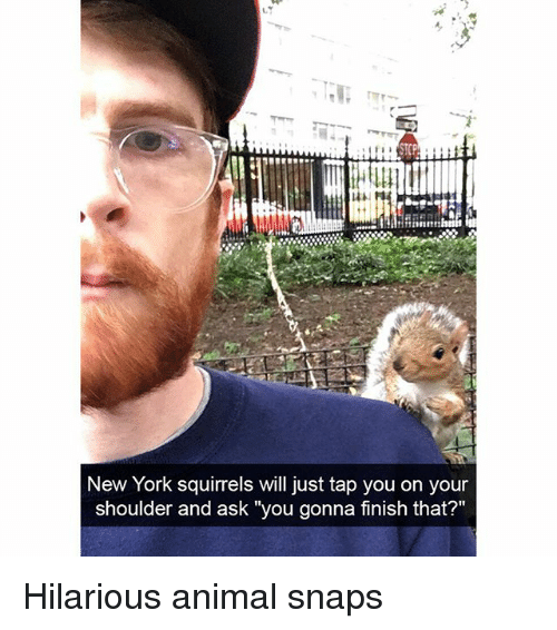 "Funny, New York, and Animal: New York squirrels will just tap you on your  shoulder and ask ""you gonna finish that?"" Hilarious animal snaps"