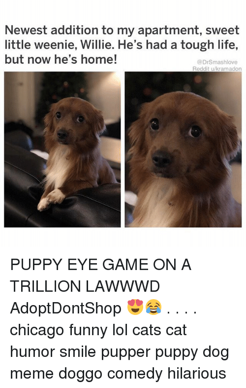 Dog Meme: Newest addition to my apartment, sweet  little weenie, Willie. He's had a tough life,  but now he's home!  @DrSmashlove  Reddit u/kramadon PUPPY EYE GAME ON A TRILLION LAWWWD AdoptDontShop 😍😂 . . . . chicago funny lol cats cat humor smile pupper puppy dog meme doggo comedy hilarious