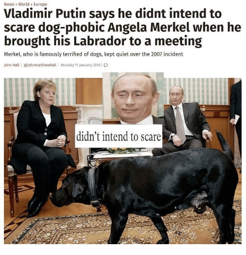 labrador: News> World> Europe  Vladimir Putin says he didnt intend to  scare dog-phobic Angela Merkel when he  brought his Labrador to a meeting  Merkel, who is famously terrified of dogs, kept quiet over the 2007 incident  John Hall | @johnmatthewhall | Monday 11 January 2016 | โ.]  didn't intend to scare