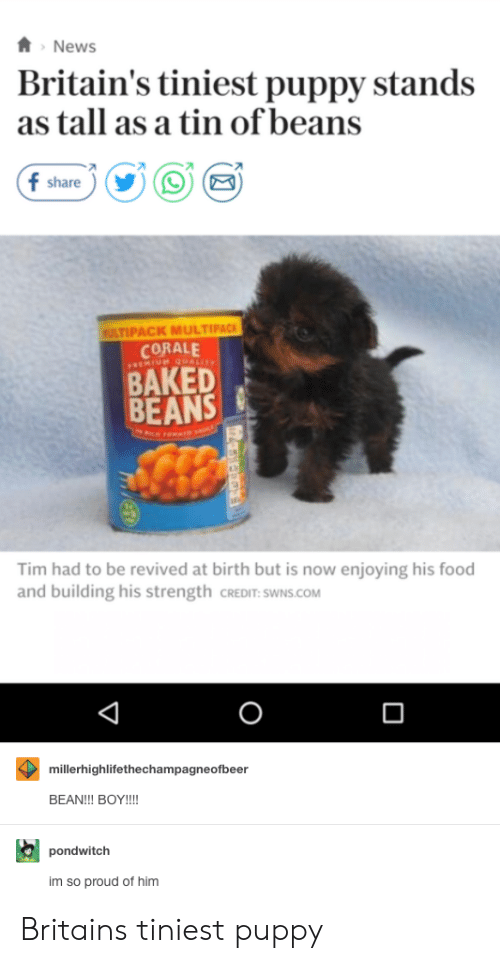 baked beans: News  Britain's tiniest puppy stands  as tall as a tin of beans  f share  ULTIPACK MULTIPACK  CORALE  BAKED  BEANS  Tim had to be revived at birth but is now enjoying his food  and building his strength CREDIT: SWNS.COM  0  millerhighlifethechampagneofbeer  BEAN!!! BOY!!!  pondwitclh  im so proud of him Britains tiniest puppy