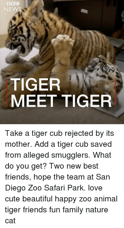 Mothering: NEWS  TIGER  MEET TIGER Take a tiger cub rejected by its mother. Add a tiger cub saved from alleged smugglers. What do you get? Two new best friends, hope the team at San Diego Zoo Safari Park. love cute beautiful happy zoo animal tiger friends fun family nature cat