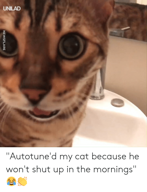 """Dank, Shut Up, and 🤖: NEWSFLARE """"Autotune'd my cat because he won't shut up in the mornings"""" 😂👏"""