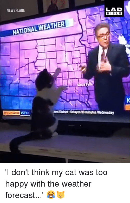 Forecast: NEWSFLARE  LAD  BIBLE  NATIONAL WEATHER  o District Delaryed 00 minutes Wednesday 'I don't think my cat was too happy with the weather forecast...' 😂🐱